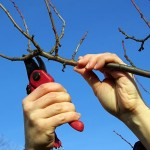 Maison du Verger à Puycelsi : stage d'initiation à la taille en janvier