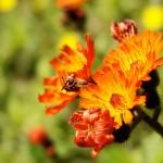 Sortie botanique à la forêt départementale de Sivens