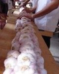Lautrec : Fête de l'ail rose de Lautrec 2011