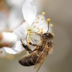 Gaillac : Araignées, guêpes et abeilles