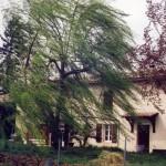Lisle-sur-Tarn : Le vent d'Autan