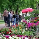 Gaillac : Floréales 2012