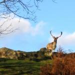Lisle-sur-Tarn : Découvrez le Brame du cerf au Domaine de Gradille