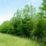 Saint-Sulpice : Réunion d'information sur l'arbre et la haie champêtre dans le Tarn