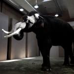 Positivons ! Koshik, l'éléphant qui «parle» le coréen