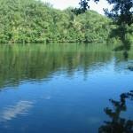 Saint-Juéry : Du bois à ramasser au bord du Tarn