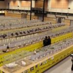 Mazamet : Exposition avicole 2013 au Palais des congrès