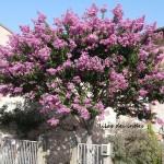 Gaillac : Patrimoine et diversité végétale à Gaillac, Pause café-pause musée au Muséum