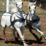 Le Garric : Fête du cheval à Cap Découverte