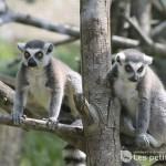 Zoo des trois vallées, Montredon-Labessonnié / © François Darnez - Les petits lézards