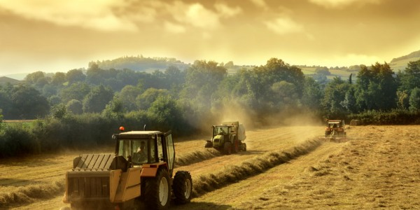 Agriculture / © olly - Fotolia