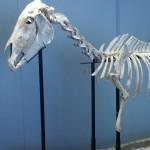 Tourisme : L'Archéocrypte Sainte-Sigolène à Lagrave, un musée pas comme les autres
