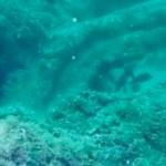 Positivons ! Une forêt vieille de 50 000 ans découverte à 18 mètres de profondeur dans le Golfe du Mexique