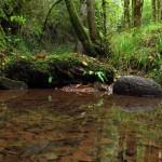Lisle-sur-Tarn : Balade botanique sur le thème de la connaissance des végétaux en milieux humides