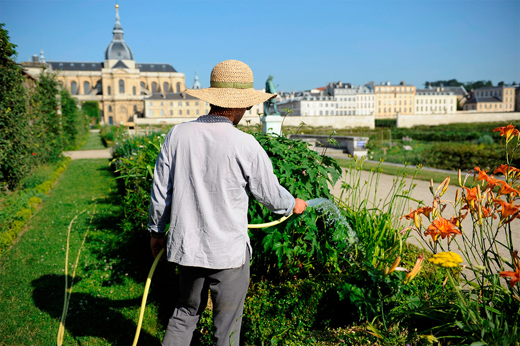 Culture cin feuille forme au jardin dans ton tarn for Jardin cultural uabc 2015