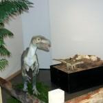 Lagrave : Exposition «Les Dinosaures»
