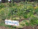 a-la-d-couverte-de-la-permaculture.jpg