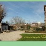 Gaillac : Atelier et taille des rosiers au jardin du Muséum