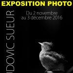 Parisot : Personnalités et consciences animales, exposition de photos à la médiathèque