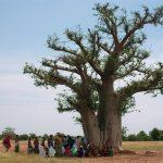 Carmaux : L'arbre à palabre, conte musical au Centre culturel Jean-Baptiste Calvignac