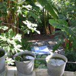 ouverture-du-jardin-des-paradis.jpg