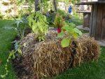 permaculture-sur-bottes-de-paille.jpg