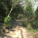 berges du tarn - chemin