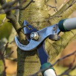 Taille des arbres fruitiers / (c) LianeM - Fotolia