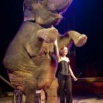 Eléphant du cirque Médrano (c) Cirque Médrano