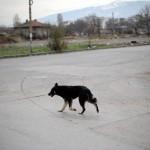 Un chien fugueur s'offre une semaine de promenade avec un routier / © Dimitar Dilkoff - AFP