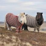 L'Ecosse met des pulls à ses poneys pour doper le tourisme / © Visit Scotland
