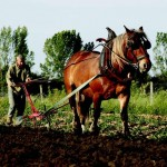 Agriculteur tarnais (c) Ville de Gaillac