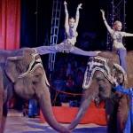 Medrano, les éléphants / © DR