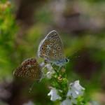 Papillons / © Trifyl