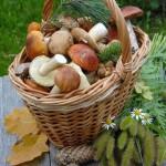 Gaillac Sortie champignons (c) Jardiniers de France