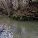 Lisle-sur-Tarn Balade Naturaliste (c) Association APIFERA