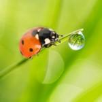 Positivons ! Des coccinelles à la place des pesticides / © Alina Isakovich - Fotolia