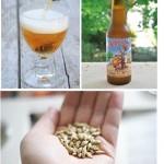 Bierologie - dégustation de biére (c) Brasserie des Vignes