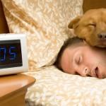 Dormir avec son animal de compagnie serait bon pour la santé / © Michael Pettigrew - Shutterstock