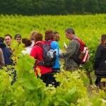 Randonnée vin primeur et châtaignes grillées (c) Association Tarn-Madagascar