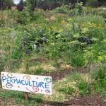 A la découverte de la permaculture (c) Médiathèque Graulhet