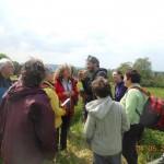 Balade : les plantes sauvages et comestibles (c) Le Jardin d'Emerveille