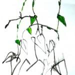 Nouveauté : Sorties botaniques (c) Ville de Gaillac