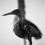 Expo : La mélancolie des oiseaux (c) ville de Gaillac