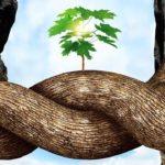 L'intelligence des arbres, documentaire (c) Le Retour du Jeudi, l'action culturelle de l'