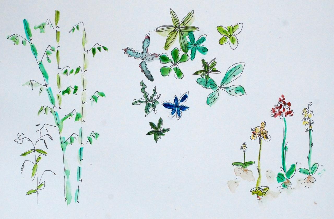 Gaillac   Sorties botaniques Plantes d Ici, d Ailleurs – Dans Ton Tarn dded6302695