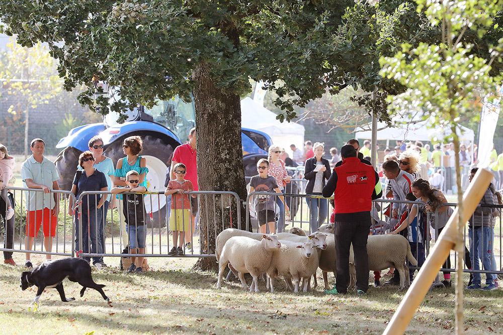 Succès pour le 2ème rendez-vous de Fermes en ville ce dimanche 14 octobre / © Communauté d'agglomération de l'Albigeois