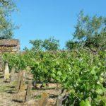 Dégustation Huile Olives (c)