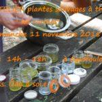 Atelier plantes sauvages thème