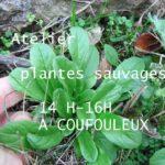 Atelier plantes sauvages de nos jardins (c) Association Ôde à soi.e